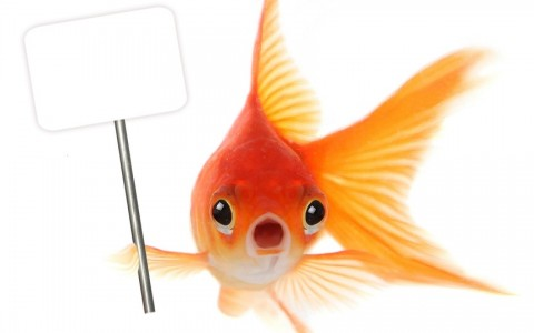 RS20831 iStock1  Images A L7  GGoldgold fish holding sign scr 480x300