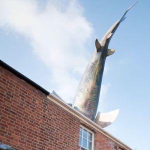 shark house cropped