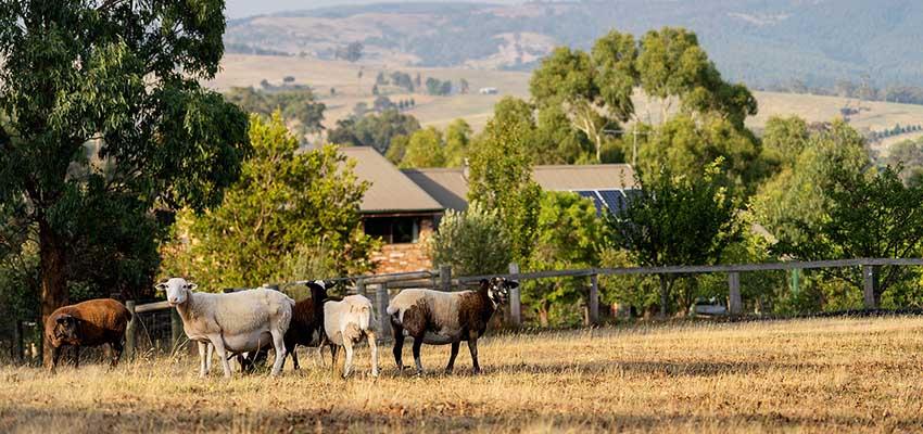 melbourne farm reb