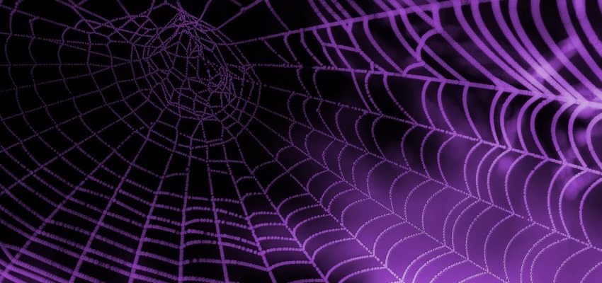 purplespiderweb 850x400 may2019