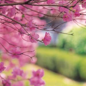 Spring tips for landlords