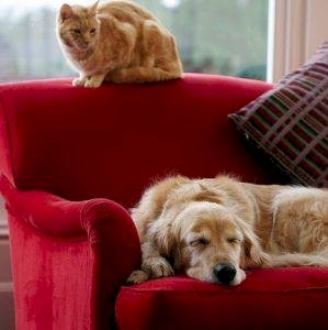 Pets in investment properties